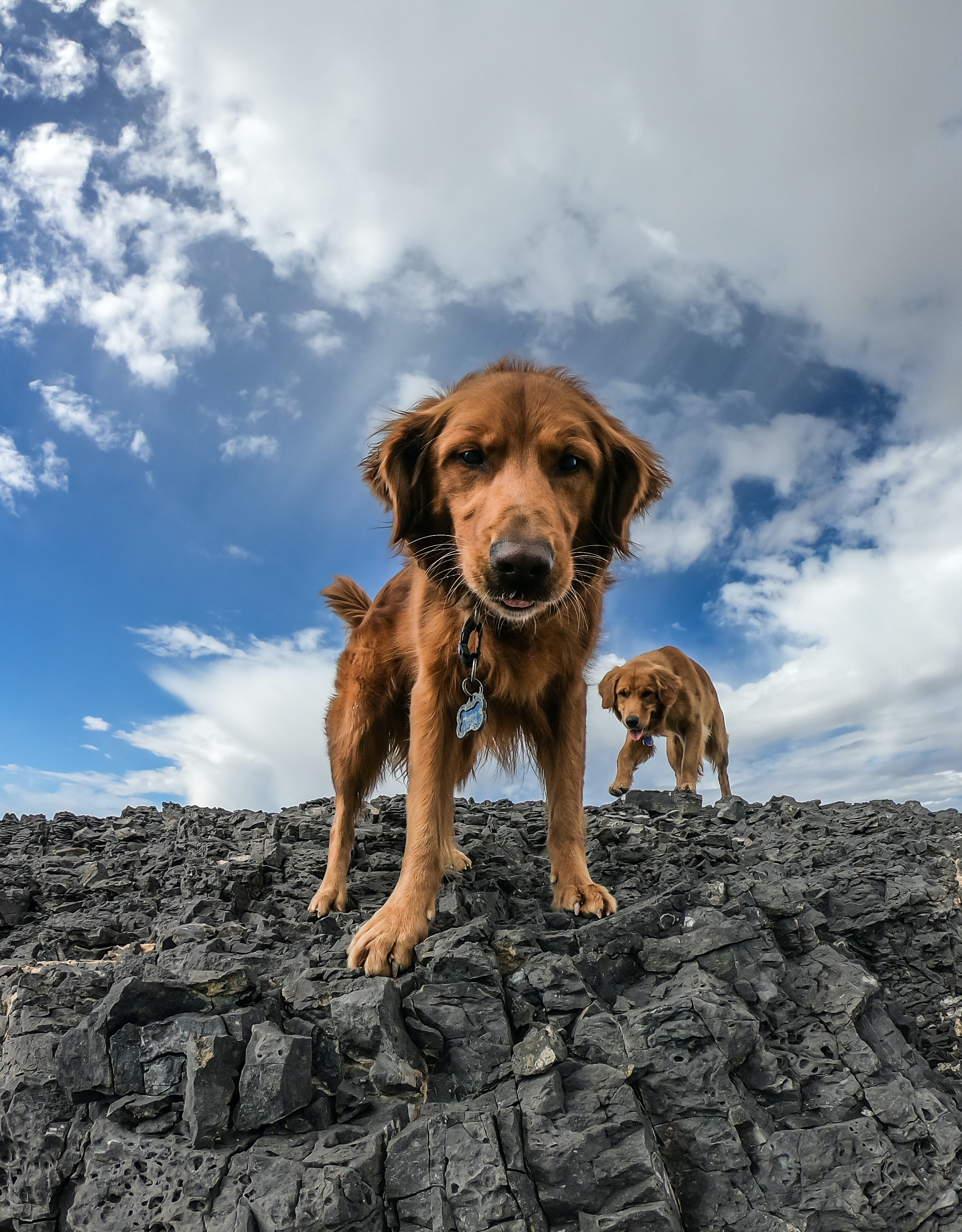 two dogs standing on cliff