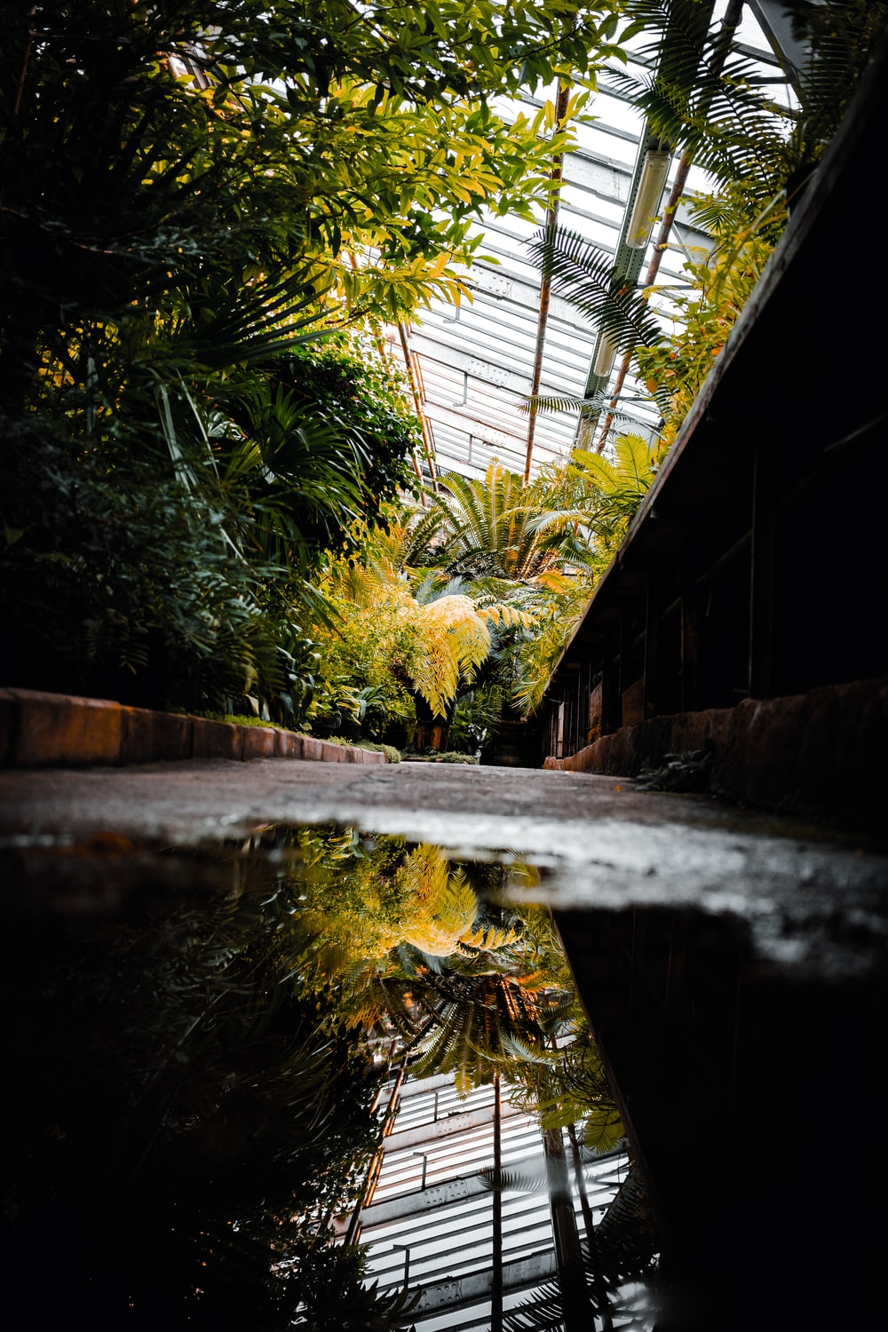 reflection of plants on water on ground inside greenhouse
