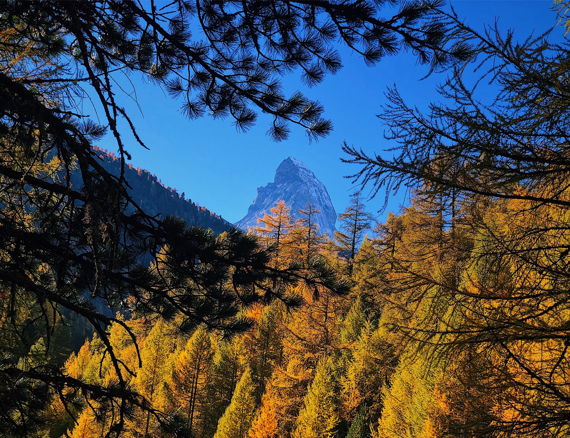A beautiful autumn day in Zermatt led us through a forest path close with beautiful views of the Matterhorn. The yellow leaves on the trees in contrast to the blue sky and mountain, inviting the travelers to come closer.