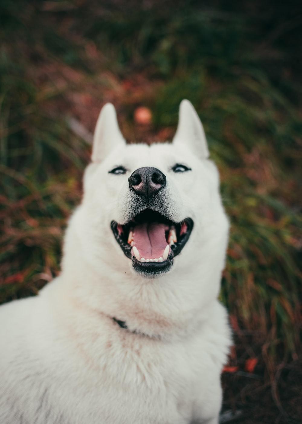 short-coat white dog near grass