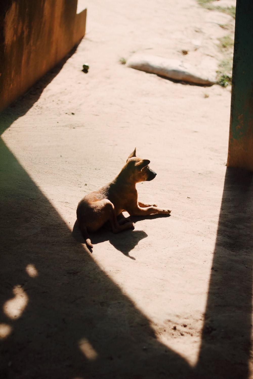 brown dog sitting on floor at daytime