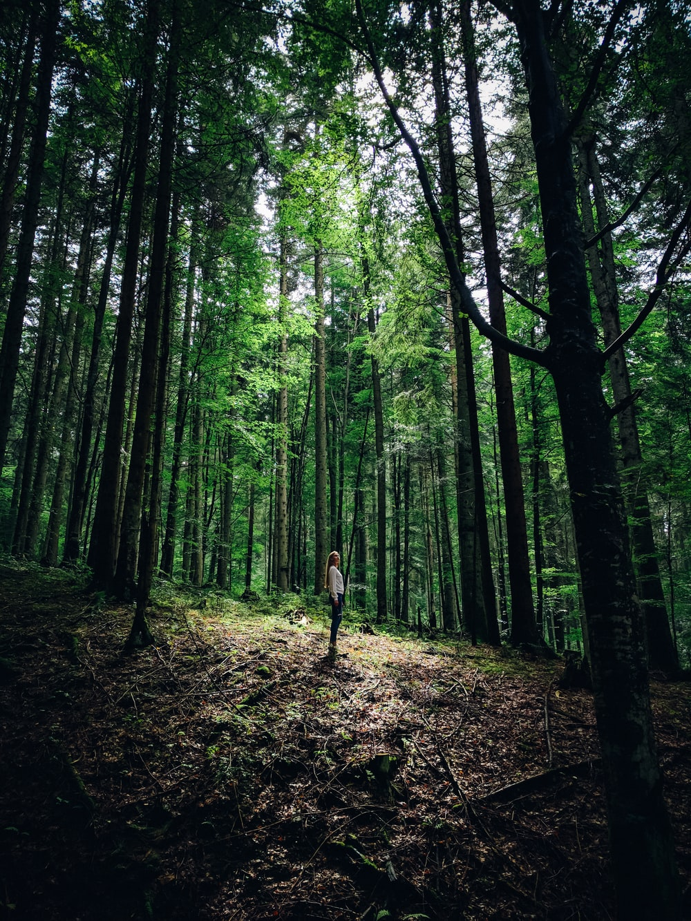 person standing on forest