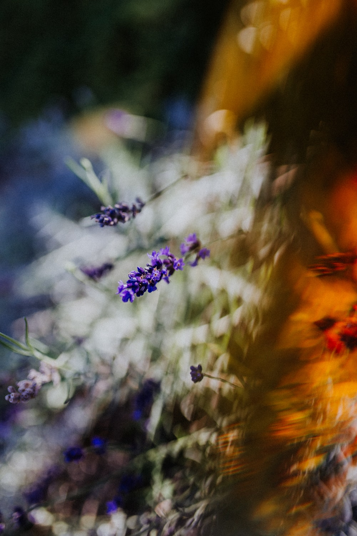 blurry image of purple flowers blooming