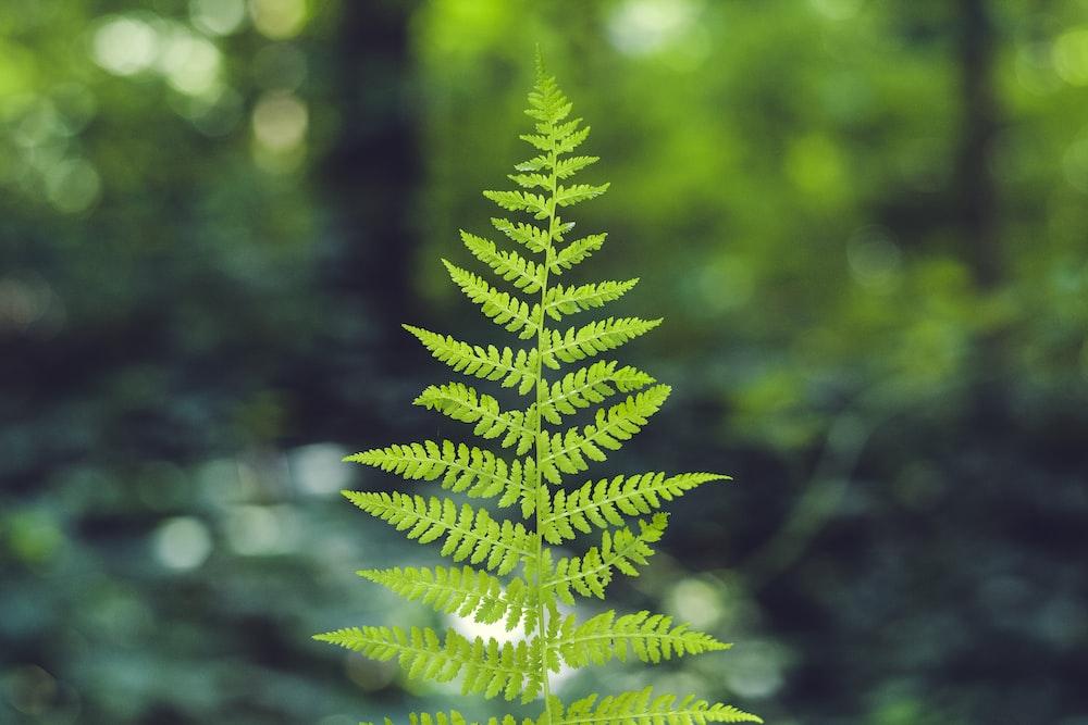 macroshot of green leafed plant