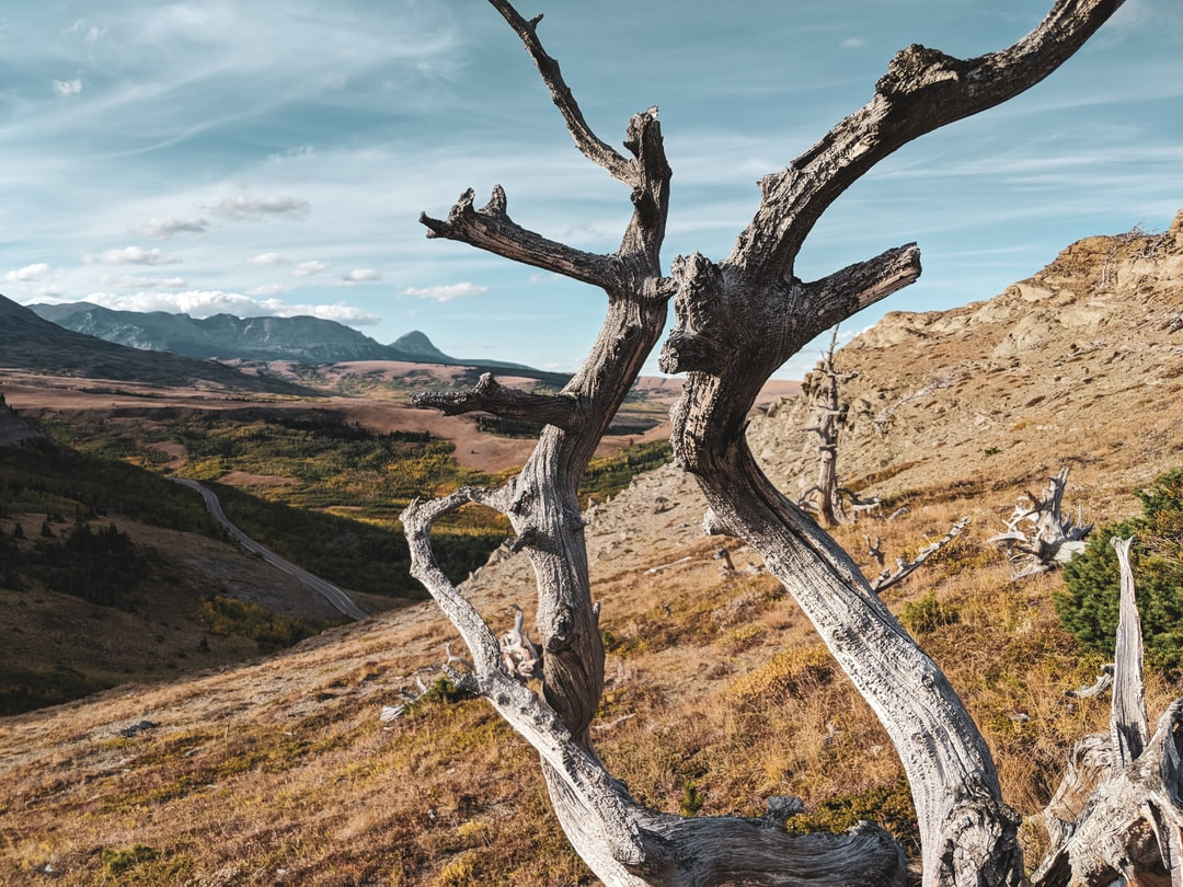 Climbed about 1000ft to get this shot of a dead tree so that's where I'm at with my life.