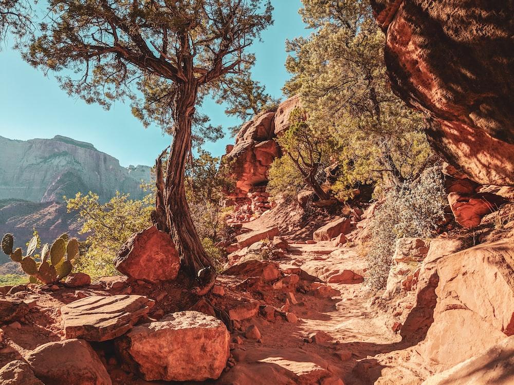 tree on rocky mountain
