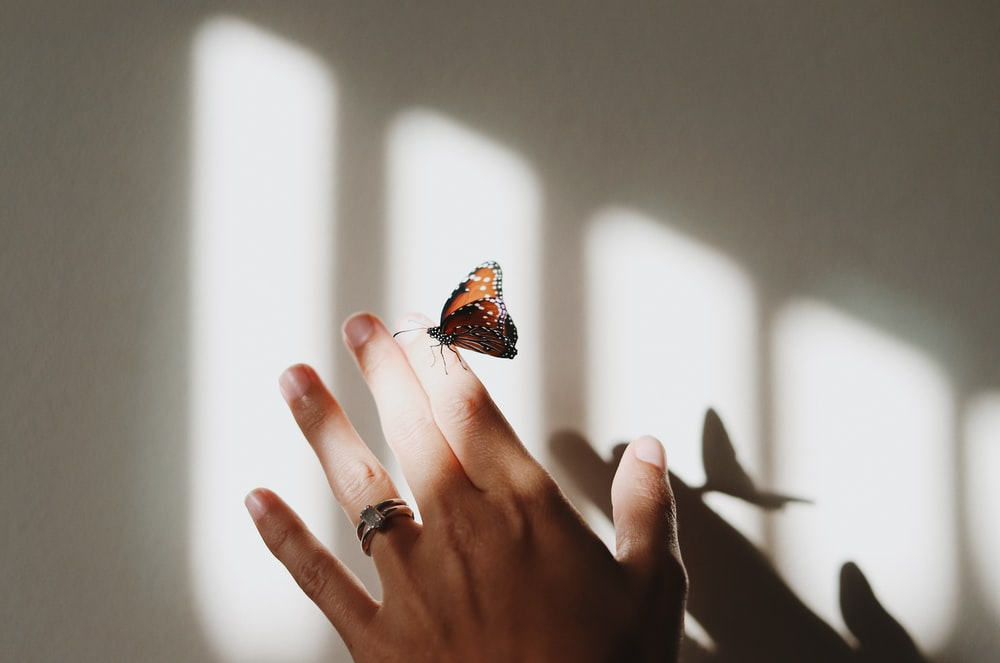 brown and gray moth on person's index finger