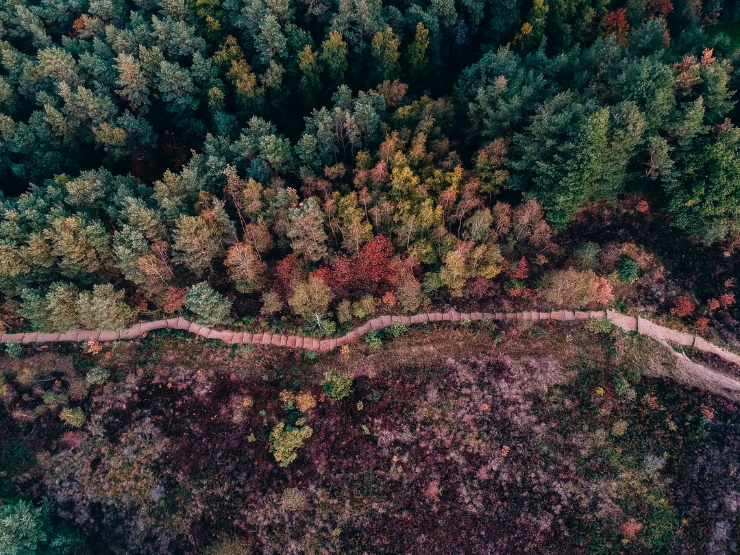 Half Forest