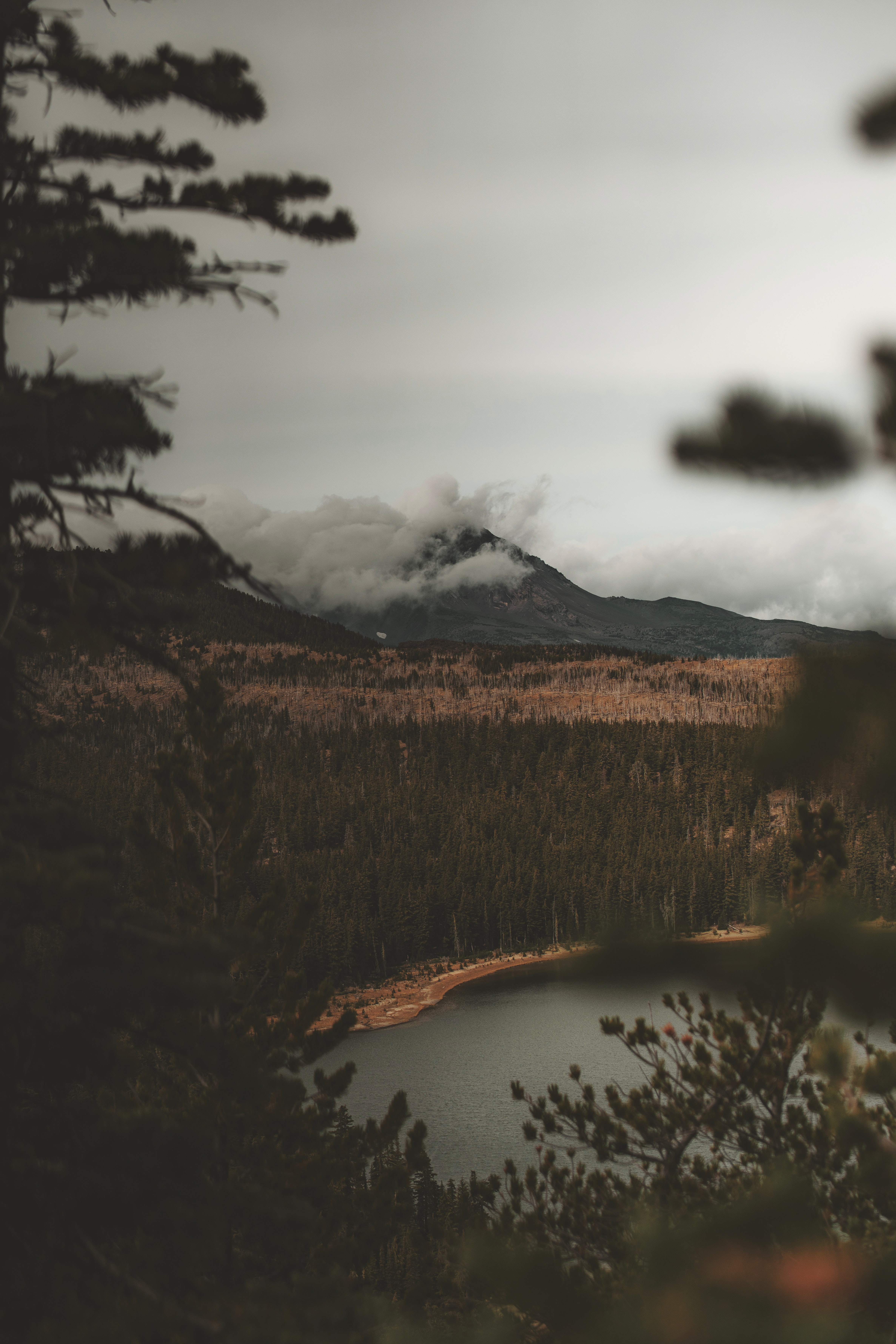 landscape photo of mountain and trees