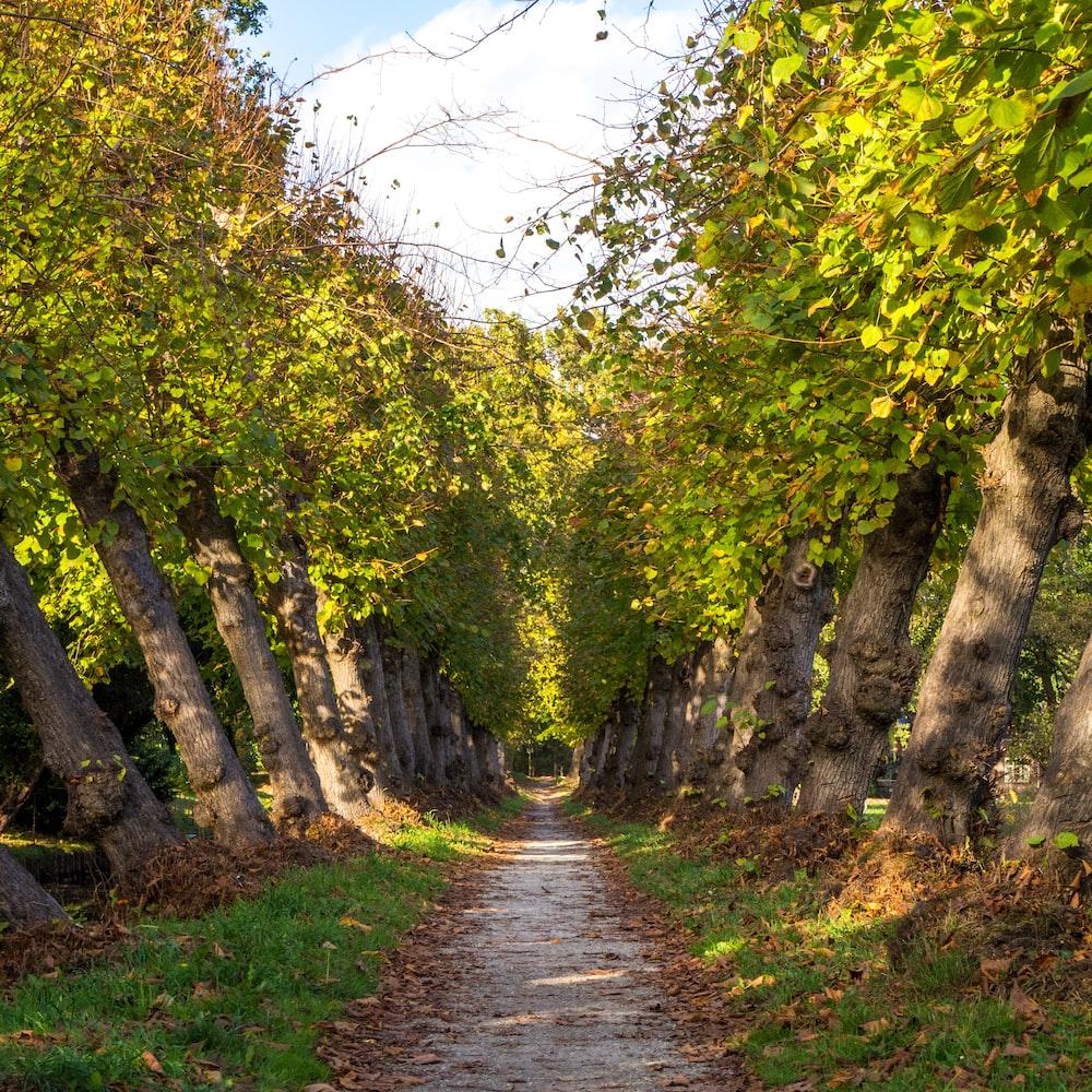 gray walkway beside trees