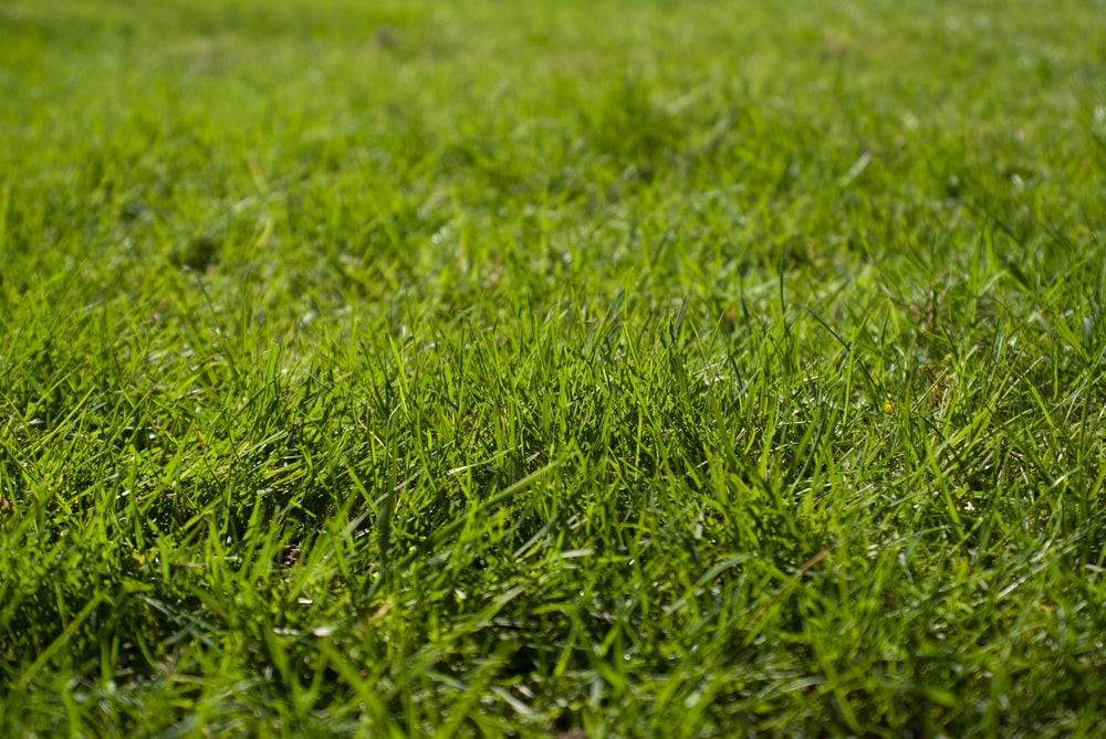 macro photography of green grass ground