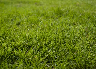 macro photography of green grass ground