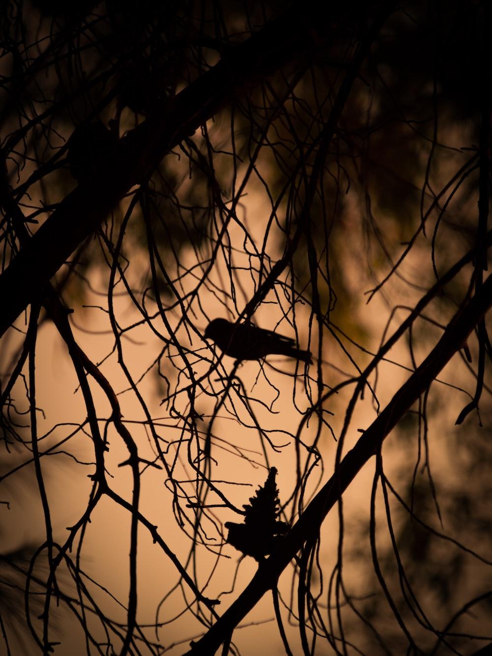 silhouette of bird on tree trunk