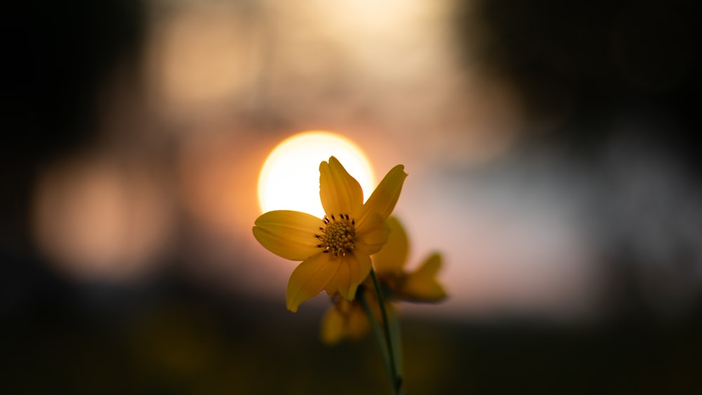 selective focus photography of yellow-petaled flower