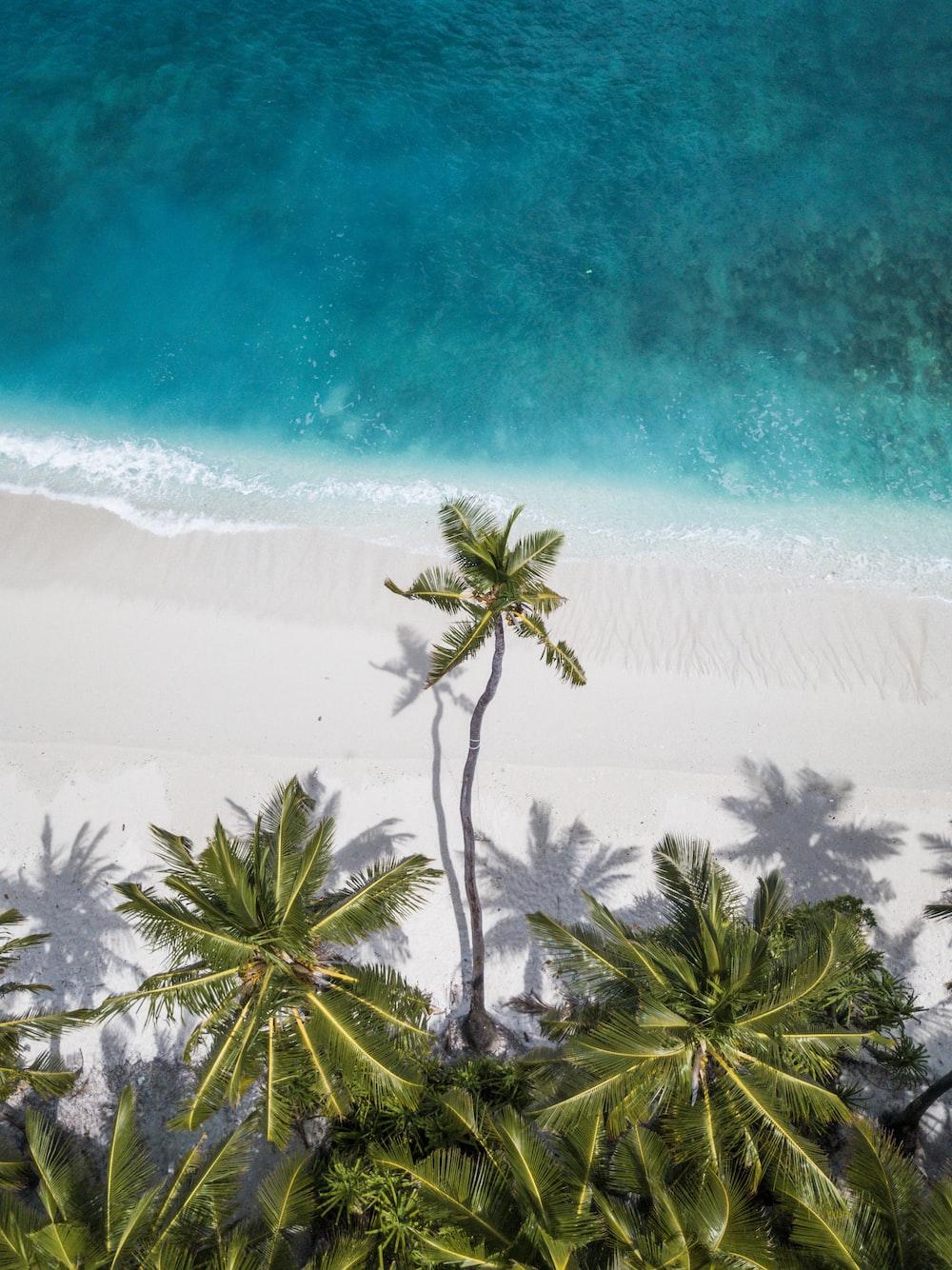 coconut trees near shore