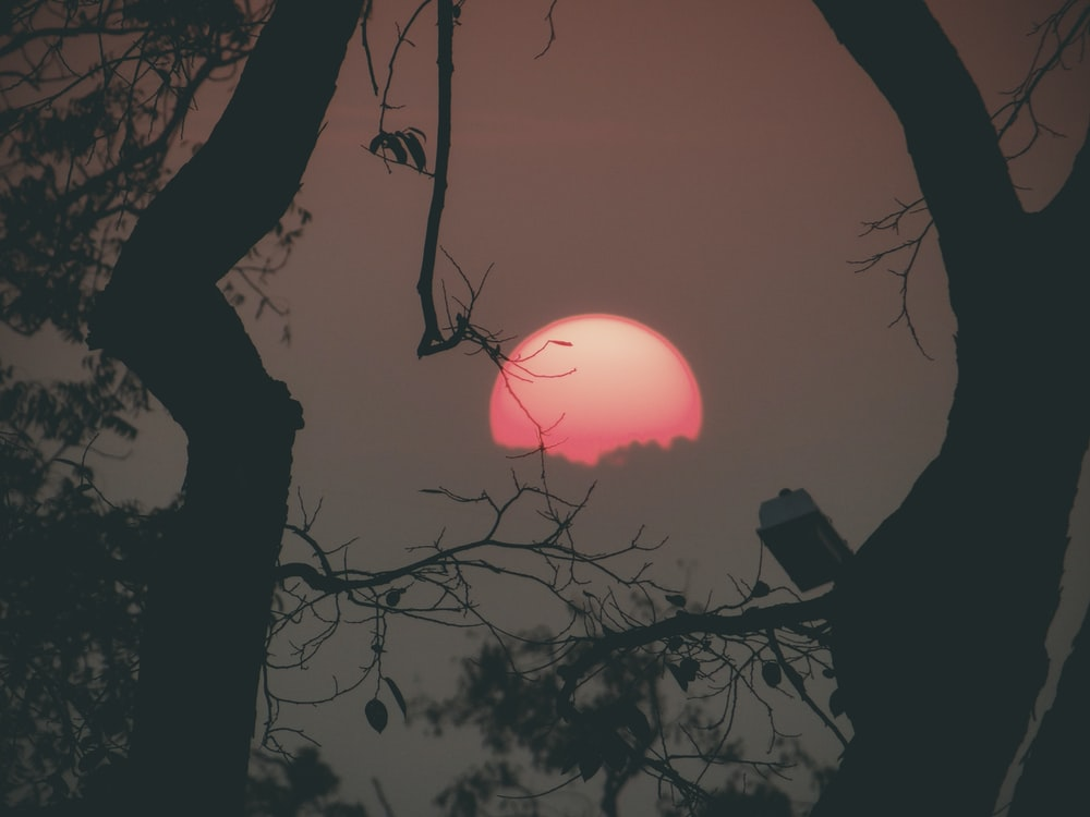 silhouette photography of full moon between trees