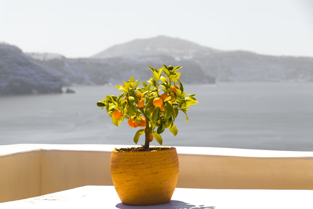 green plant on yellow ceramic pot