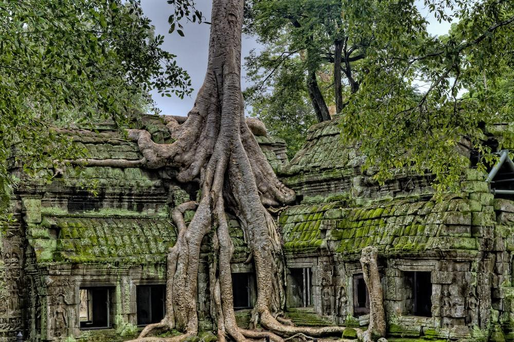 gray wood on green ruins