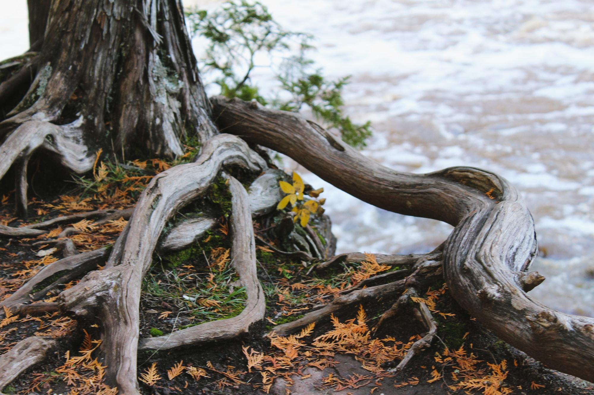 Resetting Root MySQL password for MariaDB on CentOS
