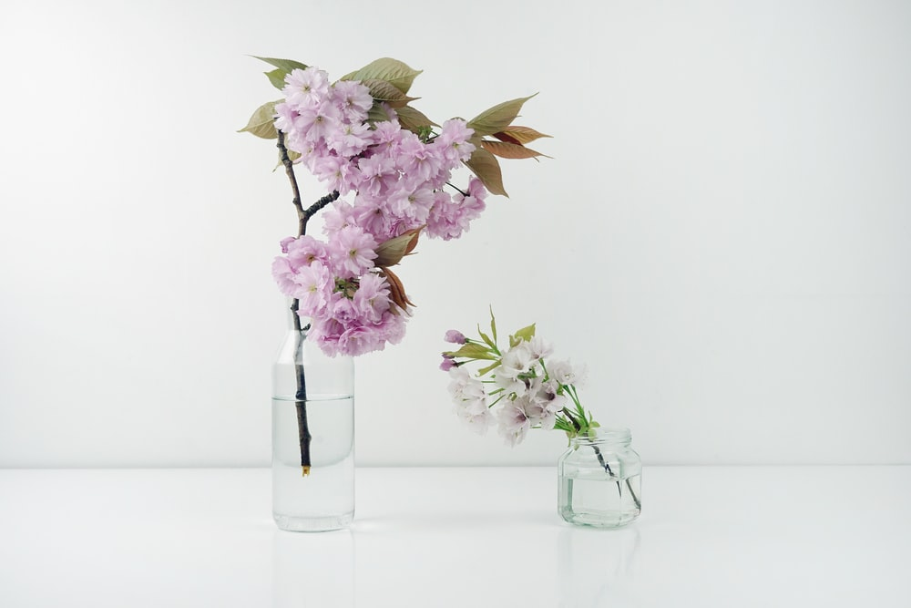 green-leafed plant with white and purple flowers in clear flower vase