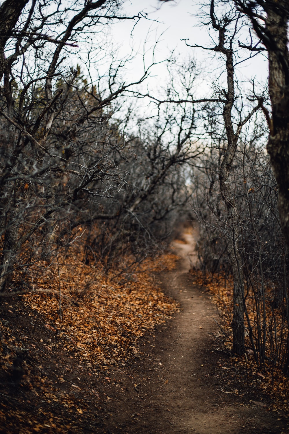 black leafless trees and pathway