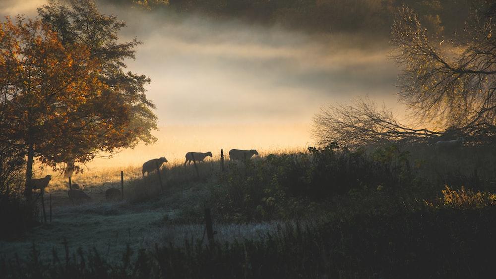 herd of animal walking on grass field