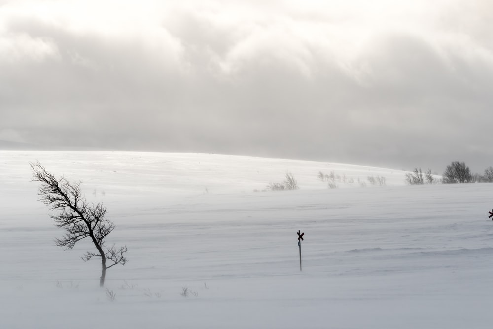 wind on snow field