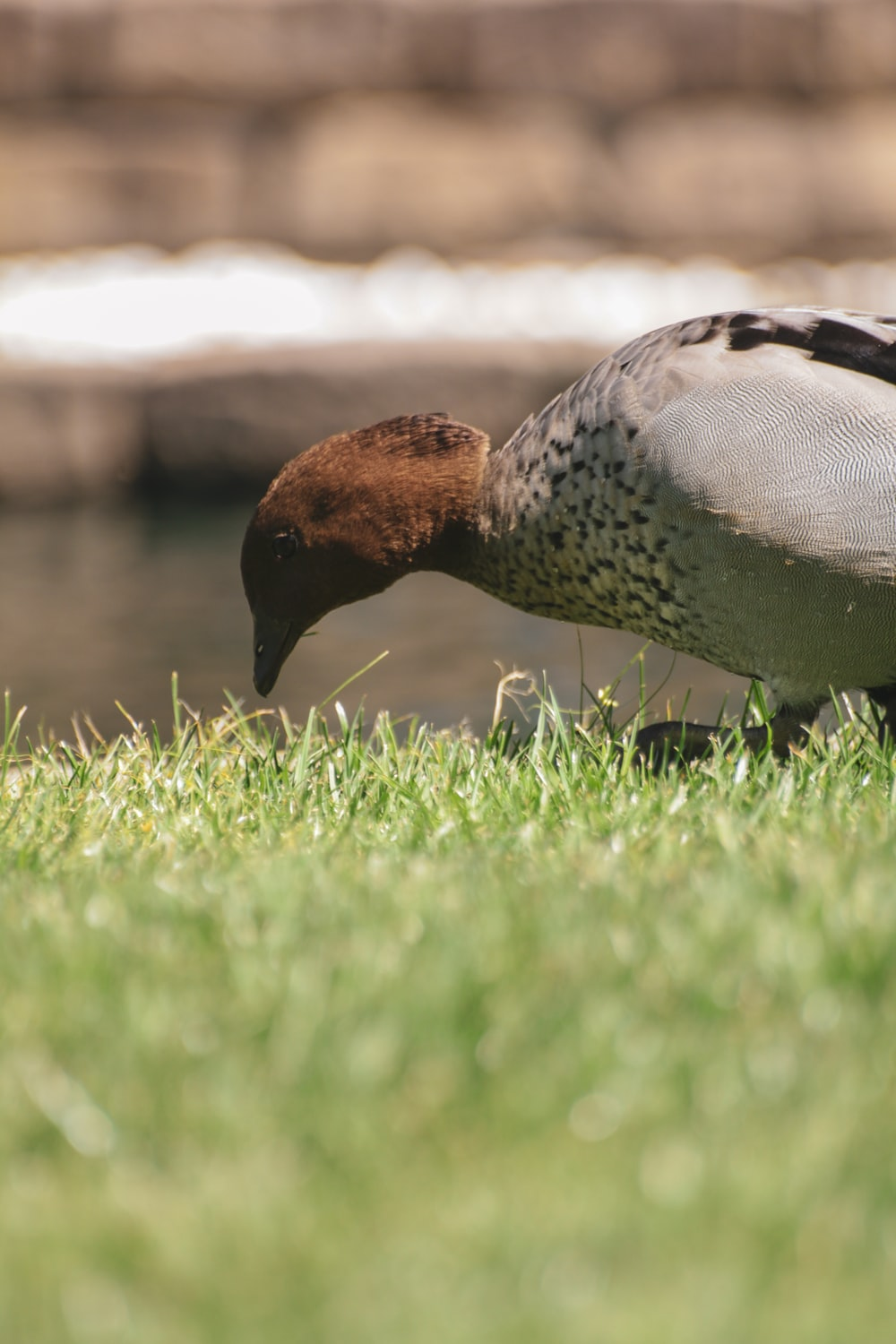 brown and gray bird on grass field on selective focus photography