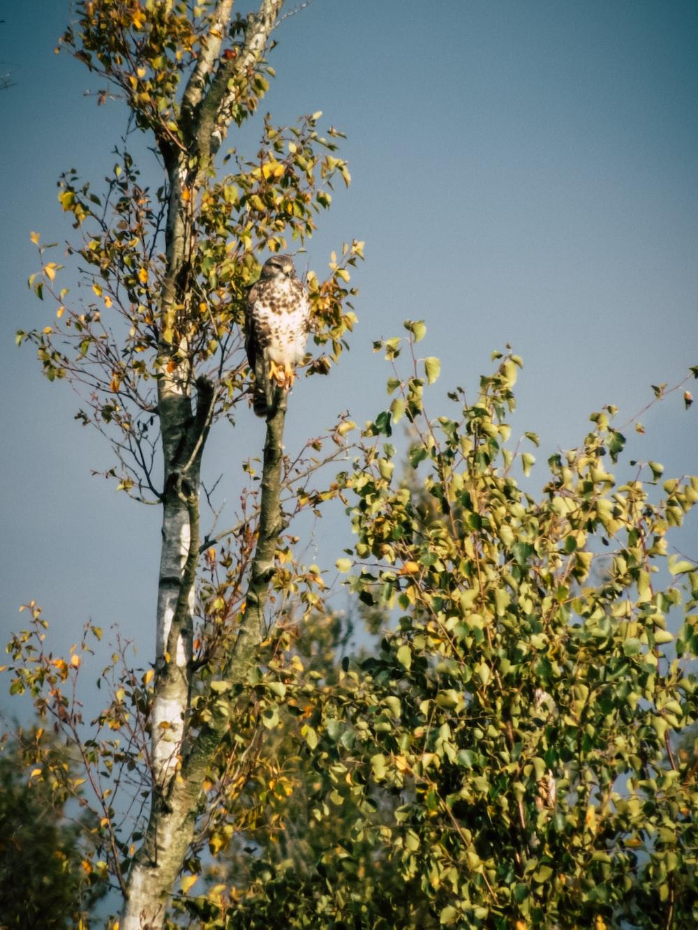 brown small beaked bird on tree