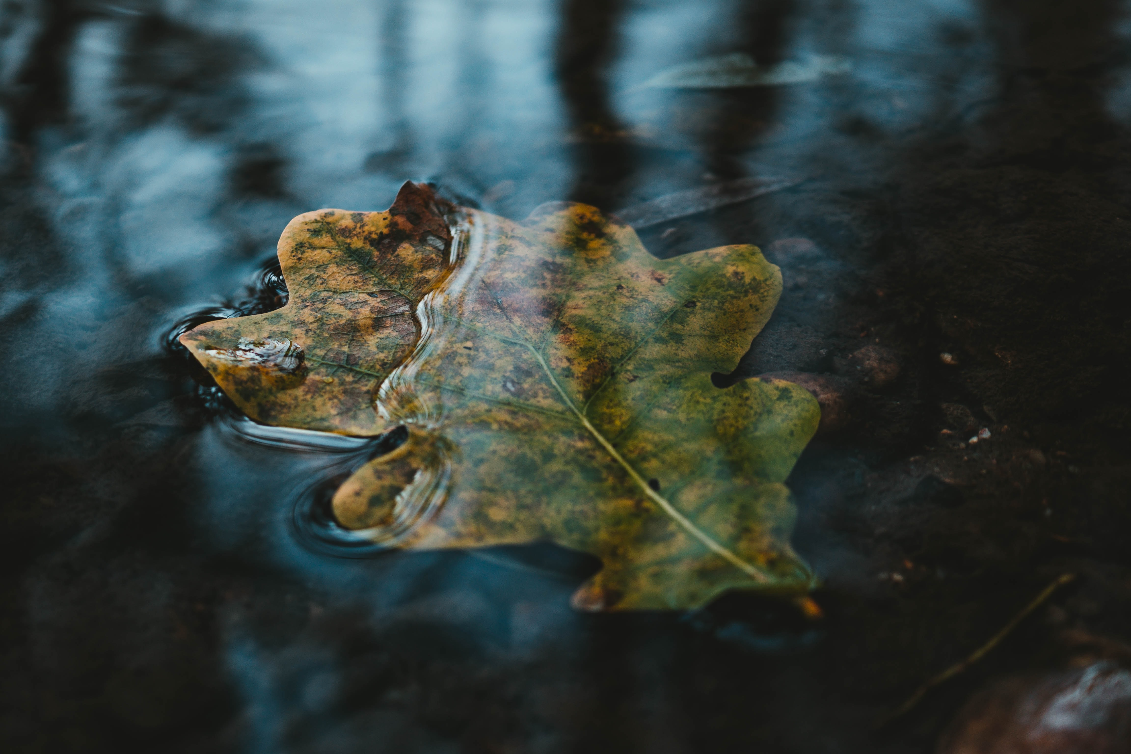 close up photography of green leaf on water