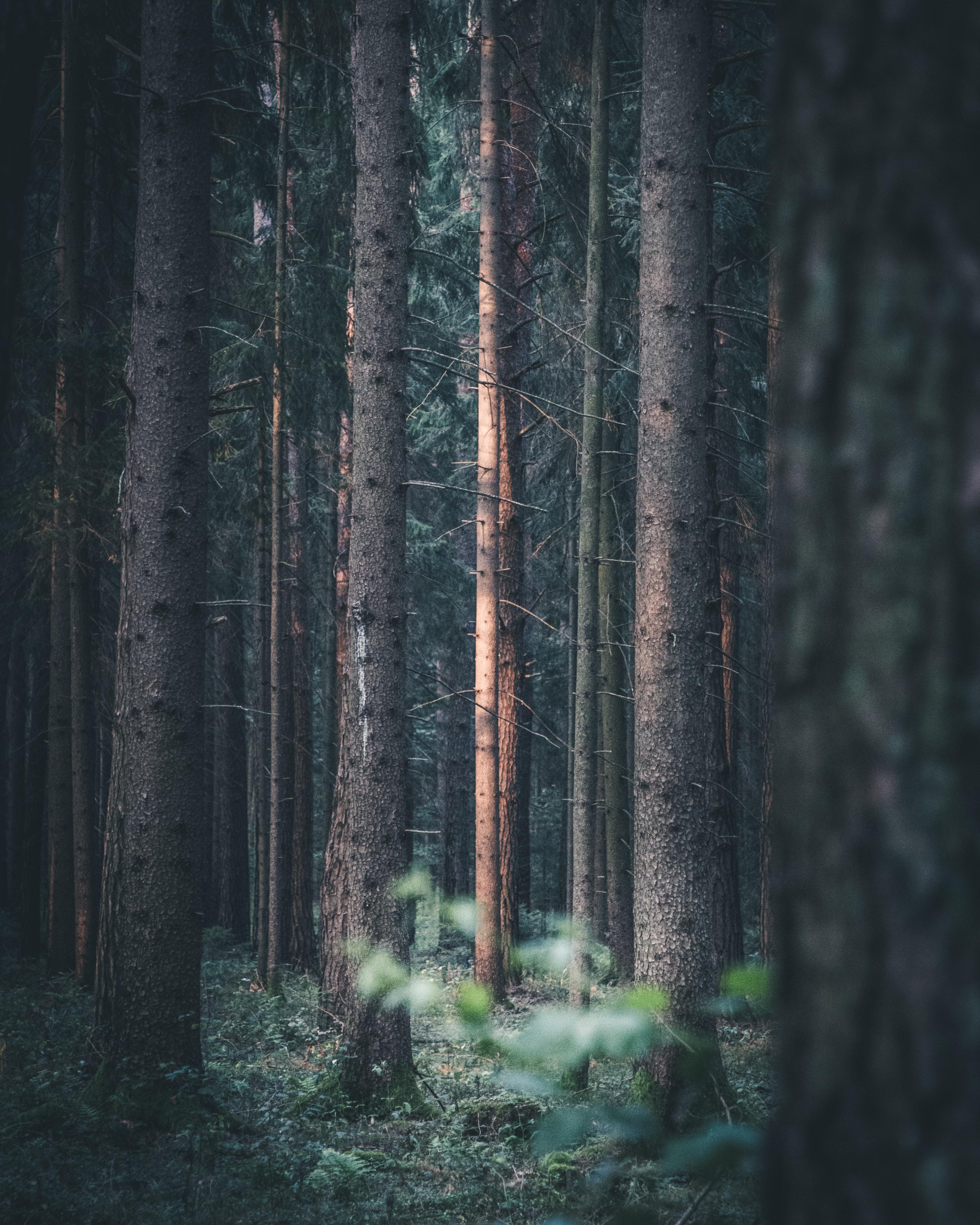 brown woods