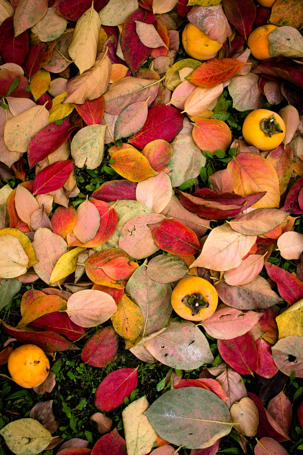 yellow and red leaf lot