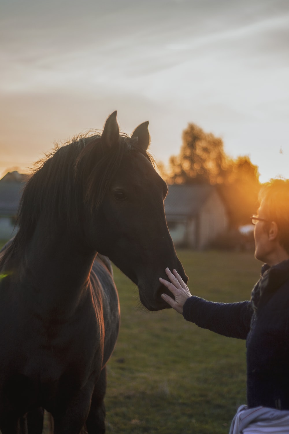 person holding snout of a horse