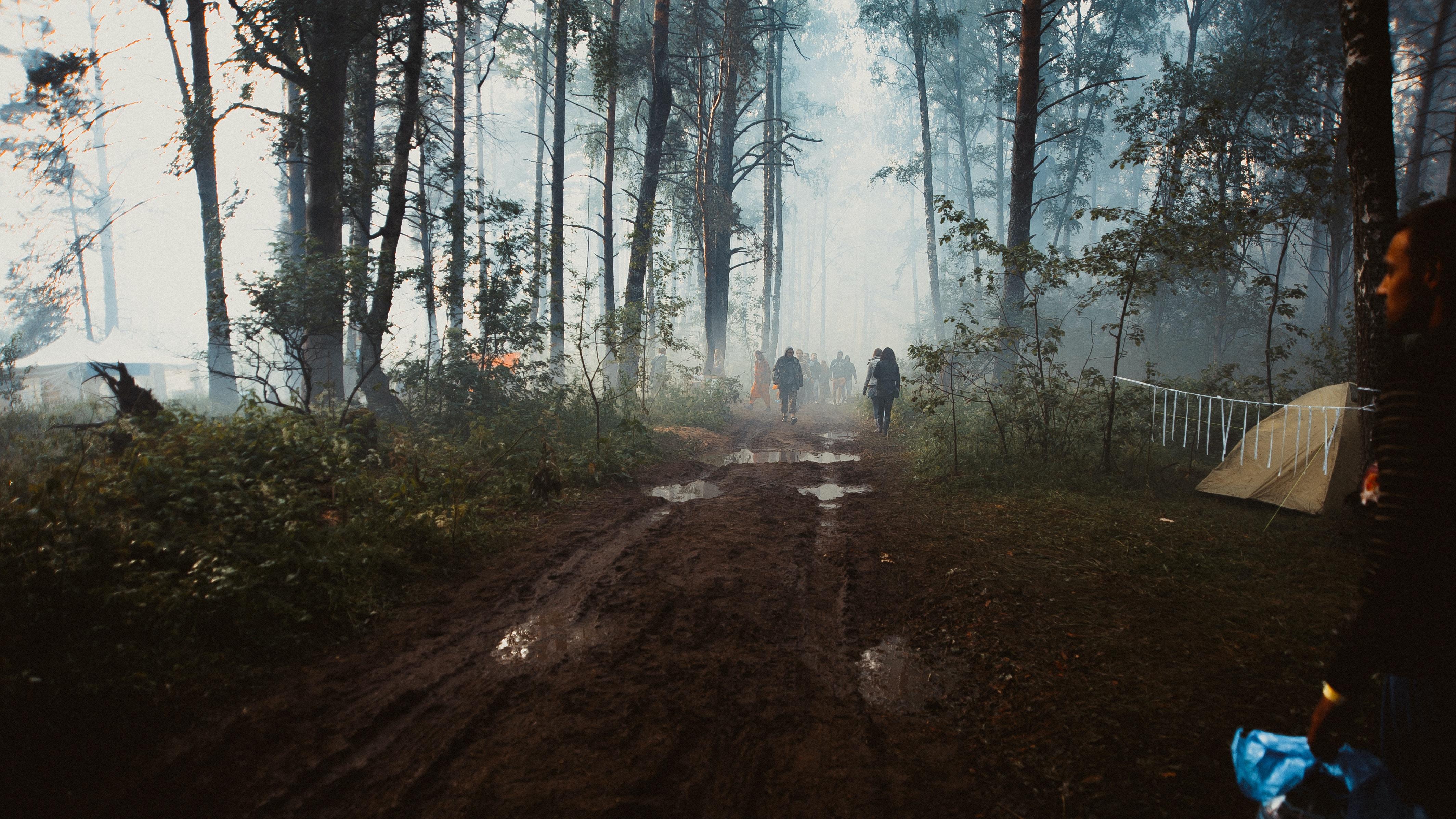 people walking in forest trail