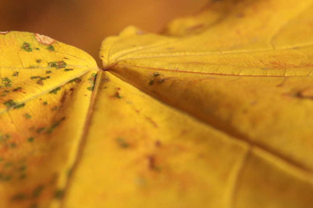 close up photography of yellow leaf