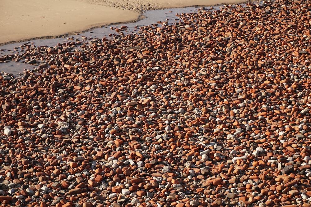 brown stones beside shore