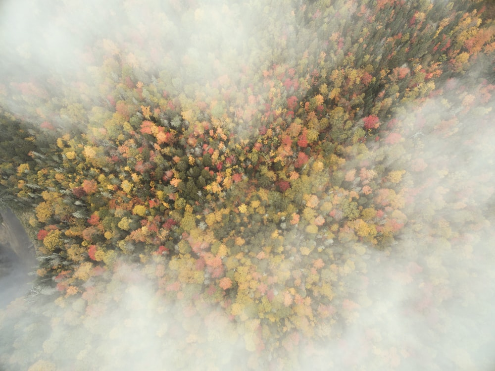 aerial photography of green trees