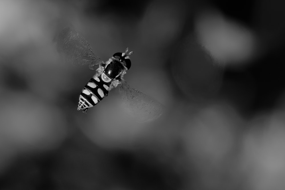 grayscale photo of bee