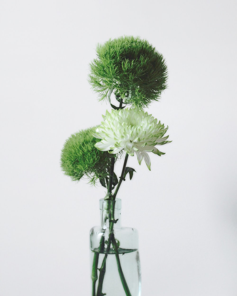 green and white flowers in vase