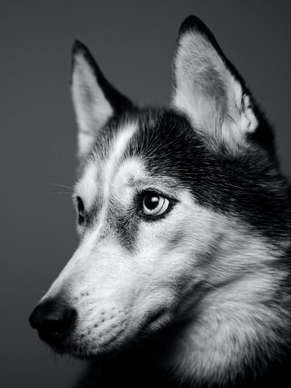 750 Black Dog Pictures Download Free Images Stock Photos On Unsplash