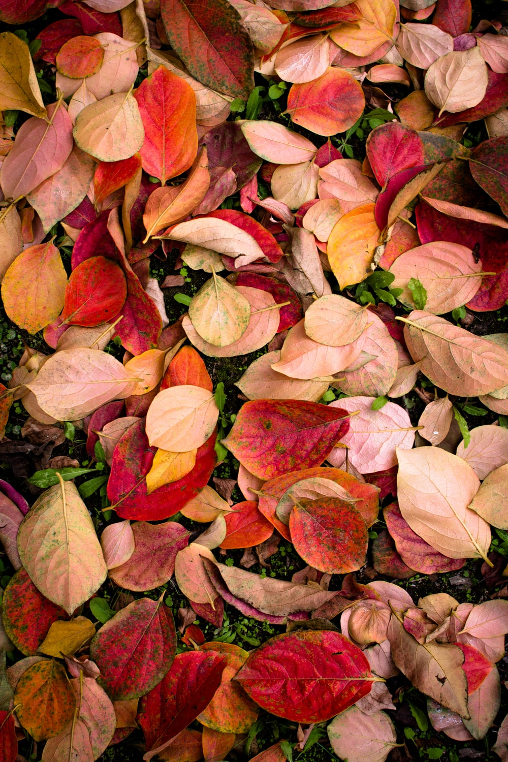 red and pink leaves on ground