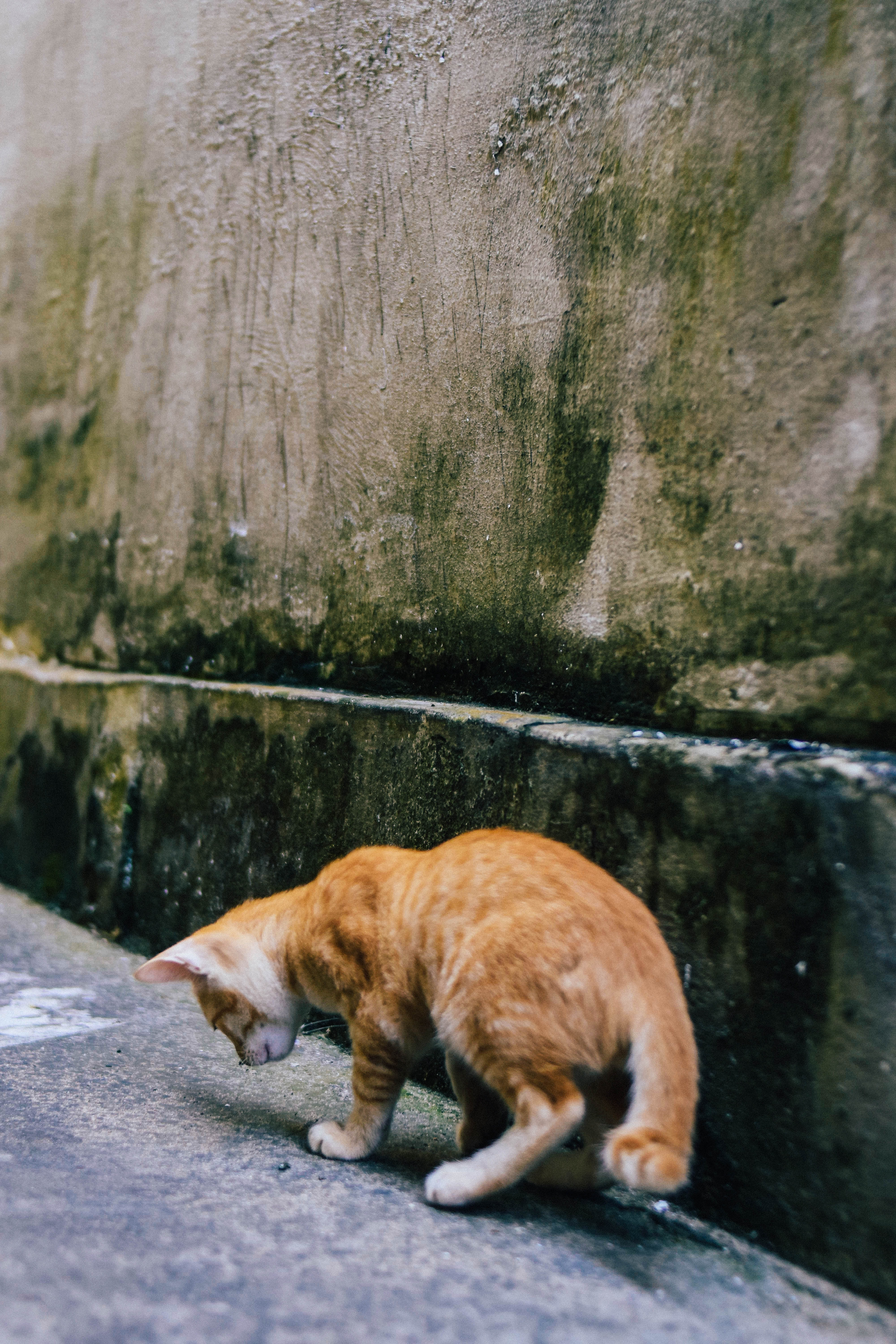 brown and white cat on concrete ground near body of water