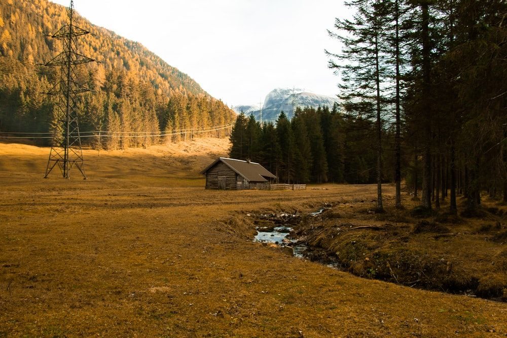 brown wooden cabin near pine trees during daytime