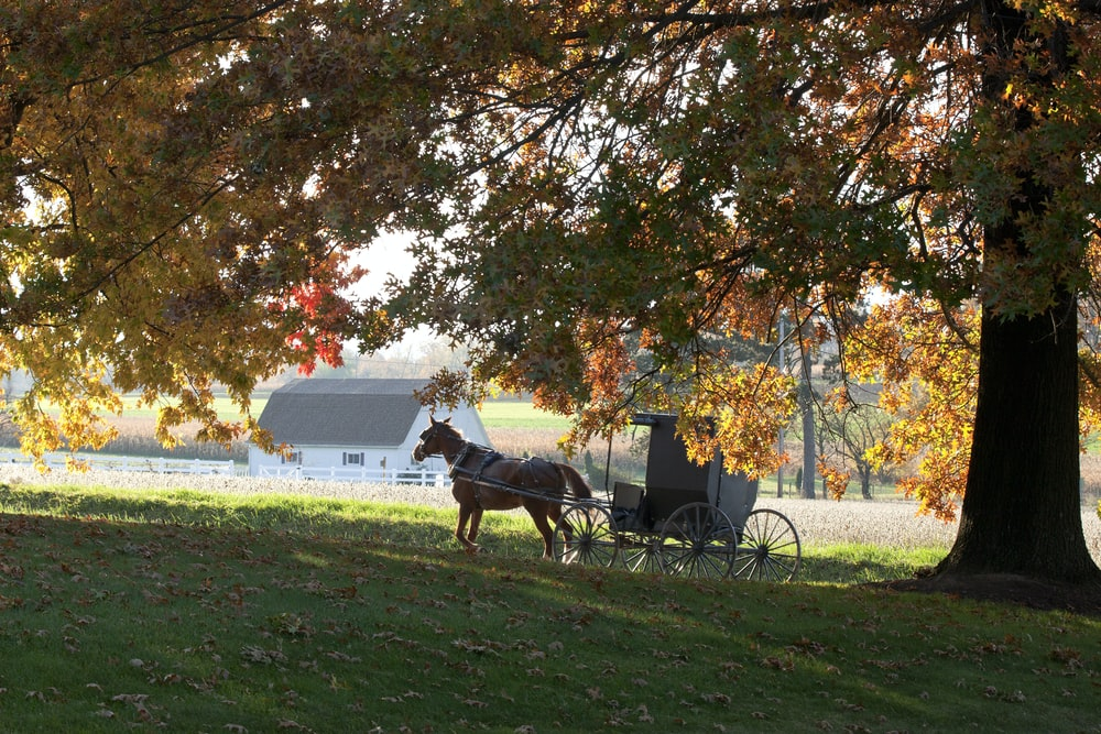horse and carriage under tree