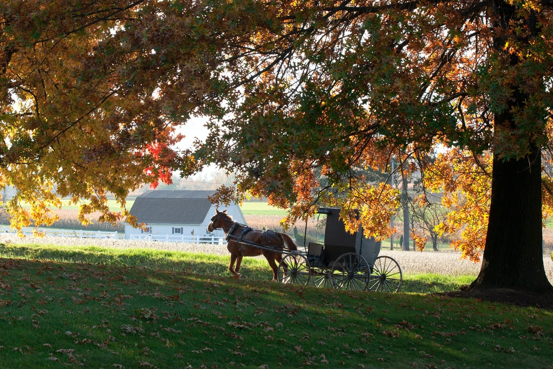 Fall arriving in Amish Country