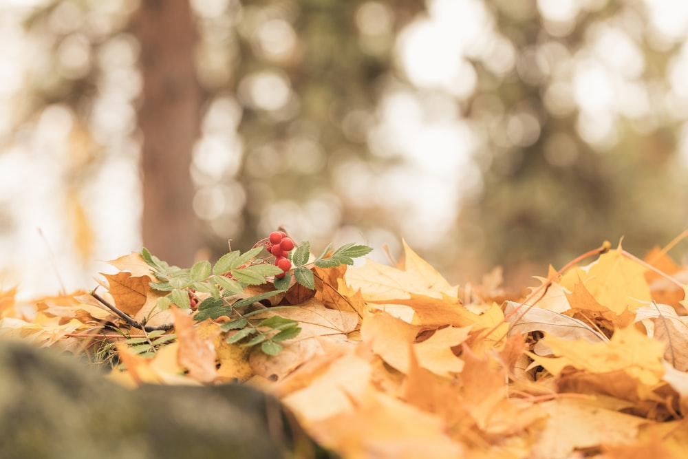 selective focus photography of leaves