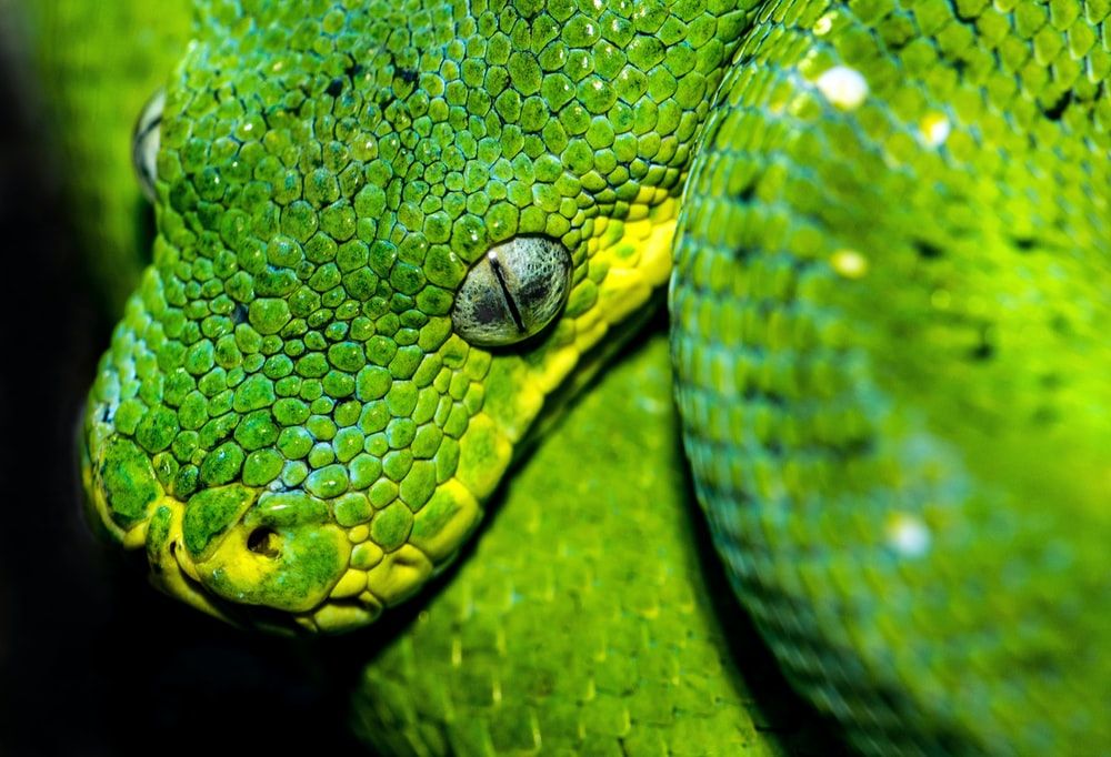shallow focus photography of viper snake