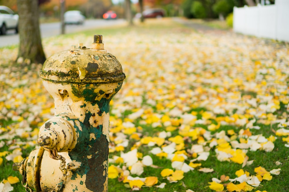 yellow fire hydrant beside leaves on ground during daytime