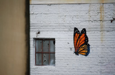 orange and black butterfly graffiti new orleans zoom background