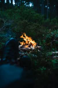 campfire's love night stories